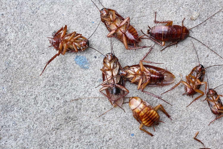 Cockroach killer