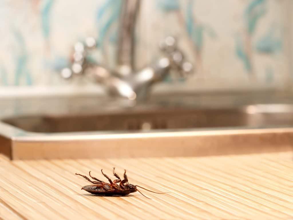 does bleach kill roaches