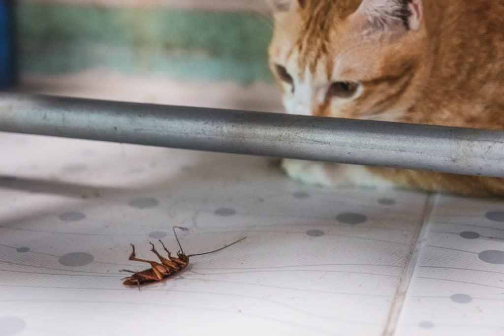 do cats eat roaches?