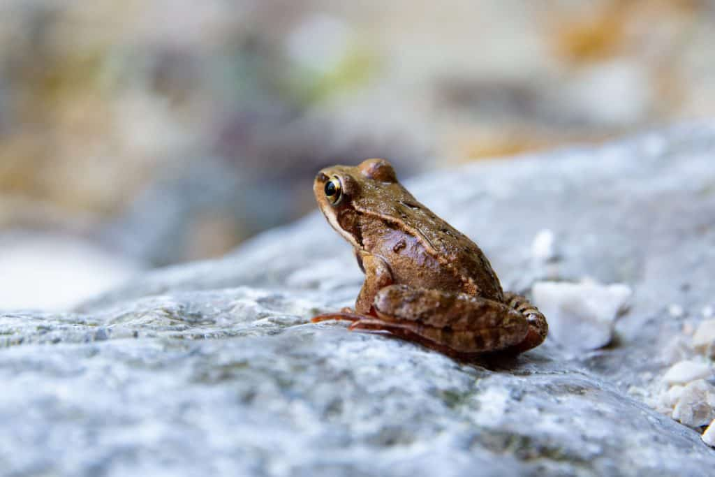do frogs eat cockroaches